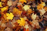 autumn-leaves-645876-m