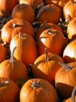pumpkin-patch-255345-m